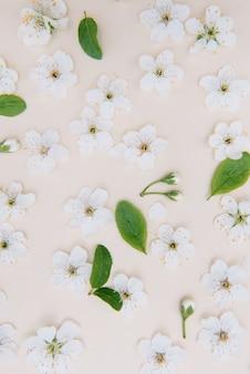 Weiße pastellfrühlingsblume auf farboberfläche