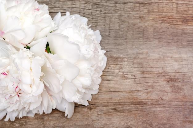 Weiße pfingstrosenblüten