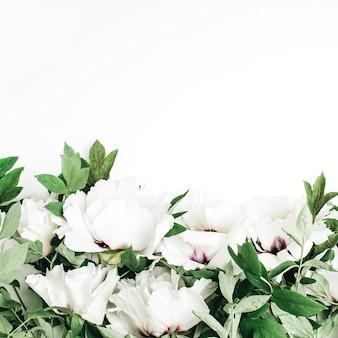 Weiße pfingstrosenblumen auf weißem hintergrund. flache lage, ansicht von oben