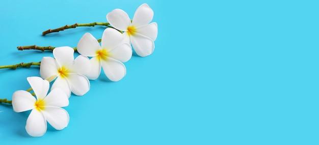 Weiße plumeriablumen auf blauem hintergrund