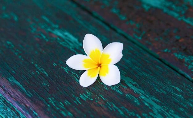 Weiße plumeriablumen auf hölzernen brettern
