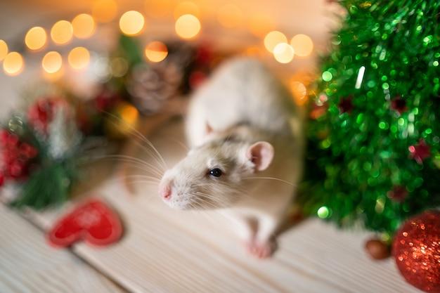 Weiße ratte auf einem weihnachtsbaum