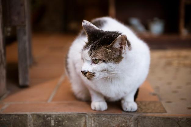 Weiße reizende katze
