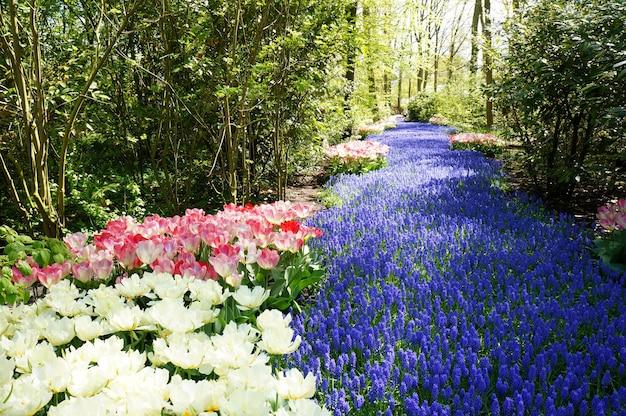 Weiße, rosa und blaue blumen, die einem von bäumen umgebenen fluss ähneln