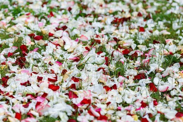 Weiße, rosa und rote rosenblätter sind im gras verstreut. hochzeitsdekorationen, floristik