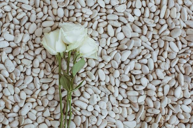 Weiße rose auf korallenhintergrund mit kopienraum