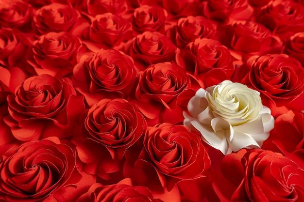 Weiße rose auf roten rosen