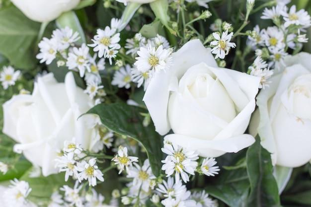 Weiße rose zum valentinstag