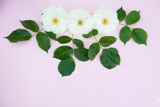 Weiße rosen auf pastellrosa