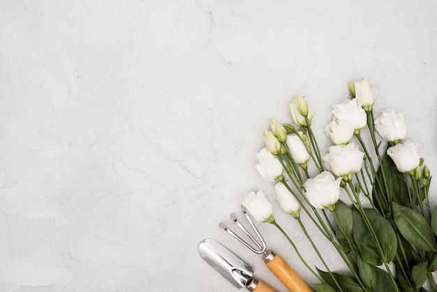 Weiße rosen der draufsicht und gartenarbeitwerkzeuge
