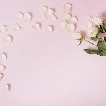 Weiße rosen und blumenblätter über rosafarbenem hintergrund