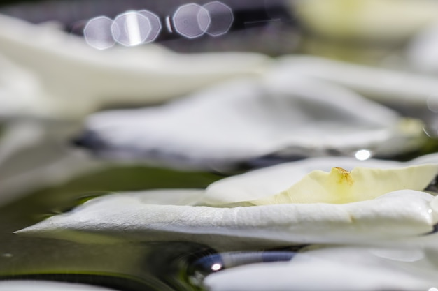 Weiße rosenblätter auf dem wasser-aromatherapie- und spa-konzept