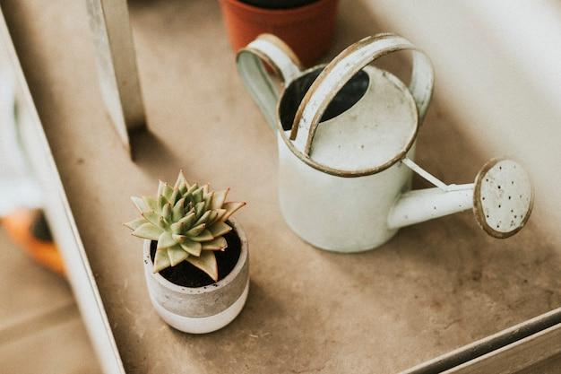 Weiße rustikale gießkanne von einem kaktus in einem gewächshaus