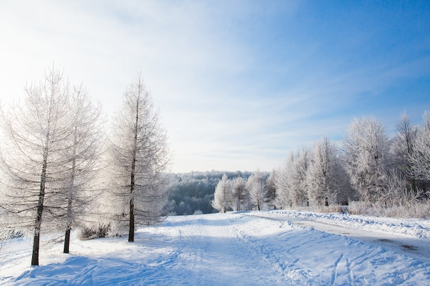 Weiße schneebedeckte bäume im winterwald und im klaren blauen himmel. schöne landschaft