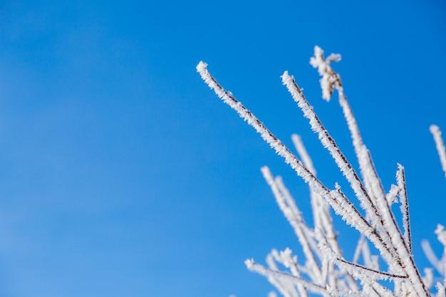 Weiße schneebedeckte niederlassungen des baums im winterwald auf blauem sk