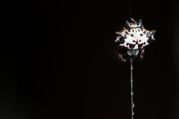 Weiße spinnennetze der makrospinne