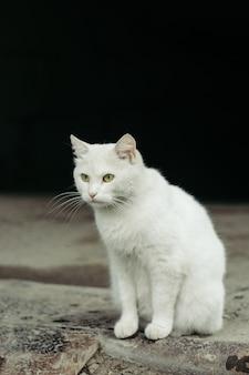 Weiße straßenkatze mit grünen augen auf schwarzem