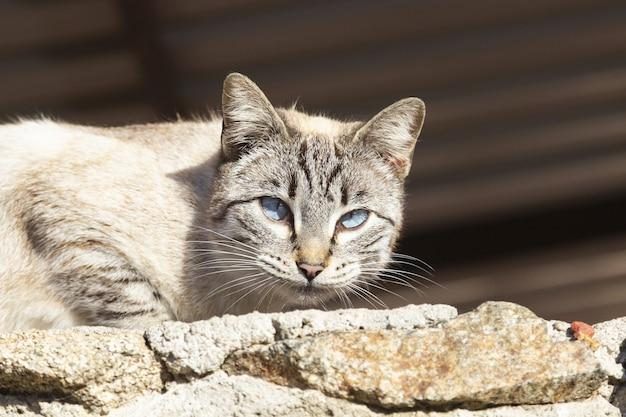 Weiße streunende katze, die mit schönen und mysteriösen augen geradeaus schaut