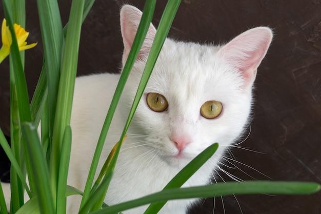 Weiße süße katze in blumen. auf einem braunen hintergrund.