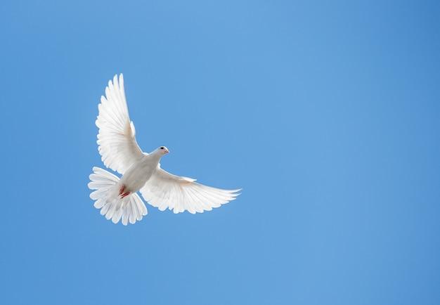 Weiße taube fliegt in den himmel