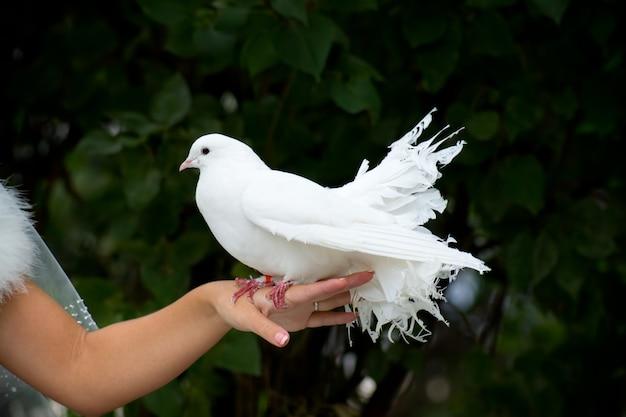 Weiße taube und weibliche hand