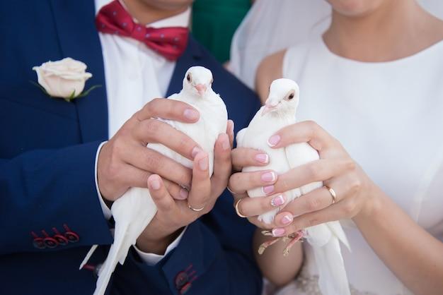 Weiße tauben in den händen von braut und bräutigam