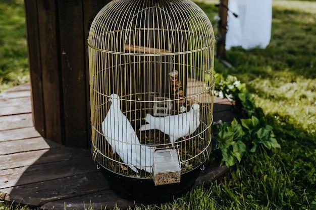 Weiße tauben in einem goldenen käfig bei einer hochzeit auf dem rasen