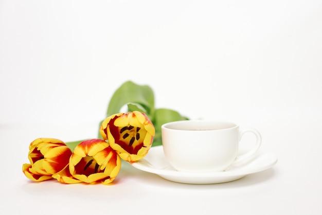 Weiße teetasse mit untertasse und roten und gelben tulpen auf weißem hintergrund konzept der liebe und des frühlings.