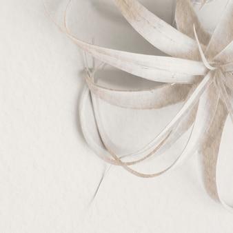 Weiße tillandsia-pflanze auf weißem hintergrund