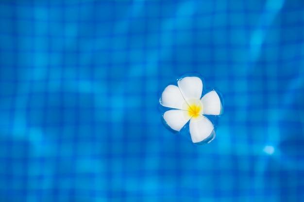 Weiße tropische frangipaniblume, die auf das wasser im unendlichkeitspool schwimmt