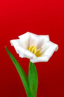 Weiße tulpe auf rotem hintergrund, blume auf makro, detailliertes foto der offenen tulpe