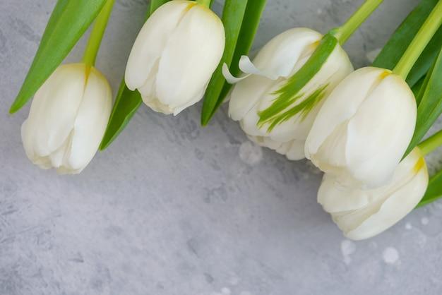 Weiße tulpen auf grauem hintergrund