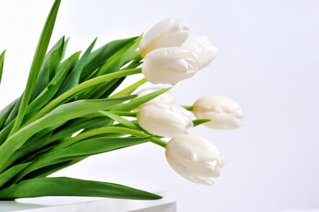Weiße tulpen auf weißem hintergrund