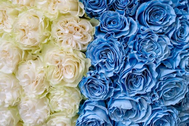 Weiße und blaue rosen.