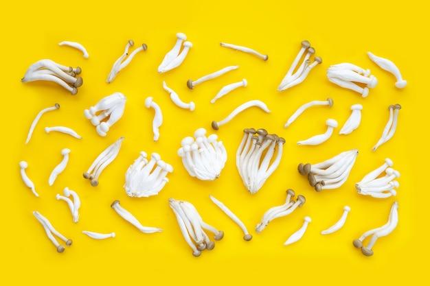 Weiße und braune buchenpilze, shimeji-pilz, speisepilz auf weißem hintergrund.