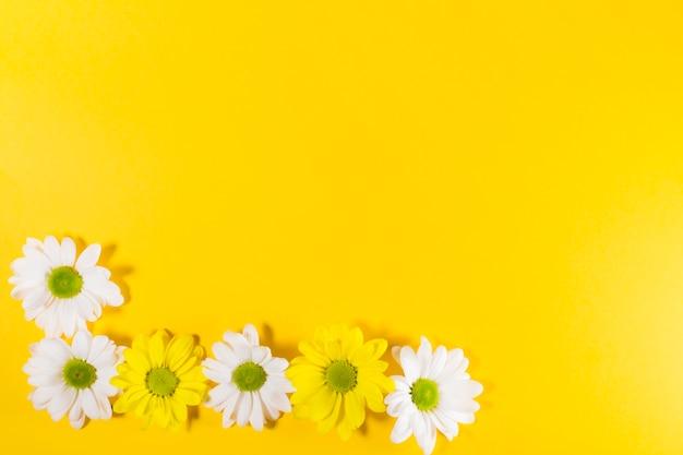 Weiße und gelbe blühende blumen
