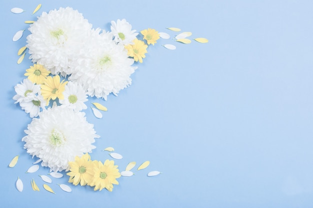 Weiße und gelbe chrysantheme auf blauer papieroberfläche
