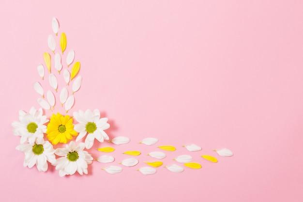 Weiße und gelbe chrysantheme auf rosa papierhintergrund