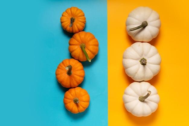 Weiße und orangefarbene kürbisse auf orangefarbenem und aquablauem hintergrund