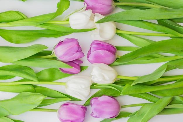 Weiße und purpurrote blühende tulpen in einem blumenhintergrund