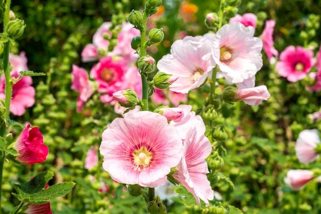 Weiße und rosa blumen im garten
