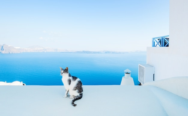 Weiße und schwarze katze auf dem dach
