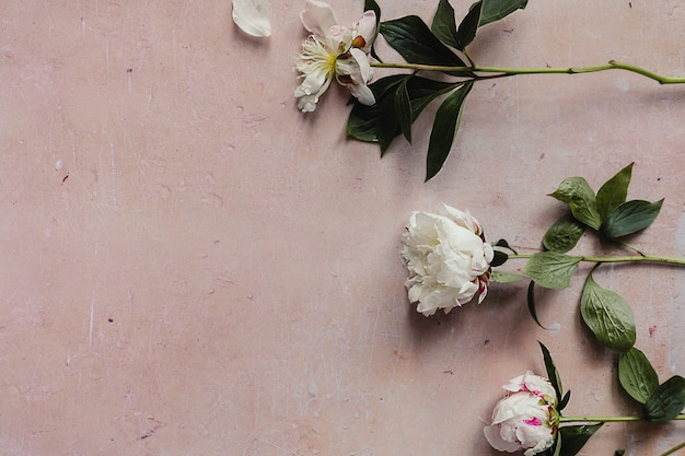 Weiße verwelkte pfingstrosenblüten mit grünen blättern auf einem rosa gealterten betonhintergrund flach.