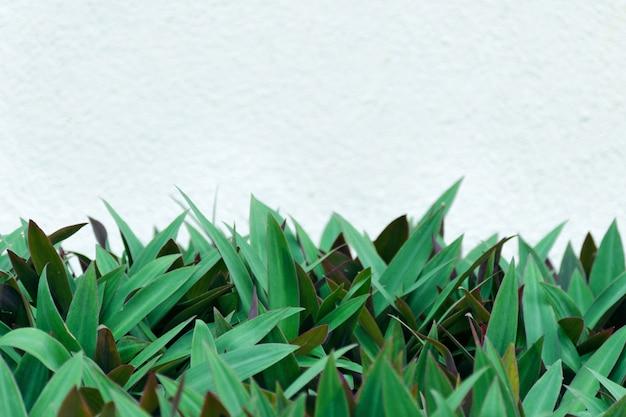 Weiße wand auf hintergrund von starken grünen blättern