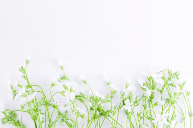 Weiße wildblumen mit grünen blättern isoliert