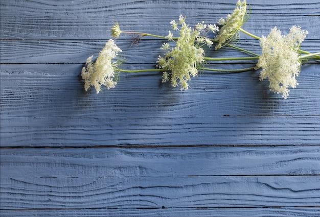 Weiße wilde blumen auf blauem hölzernem hintergrund