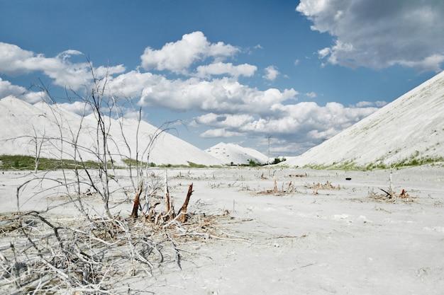 Weiße wüstenlandschaft mit toten pflanzen. konzept der globalen erwärmung und der ökologischen katastrophe. naturhintergrund