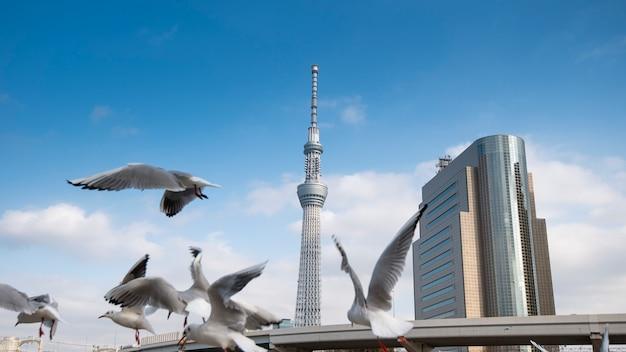 Weißer blauer himmel tokyos skytree