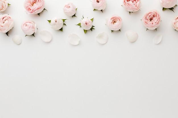 Weißer exemplarplatzhintergrund mit rosen