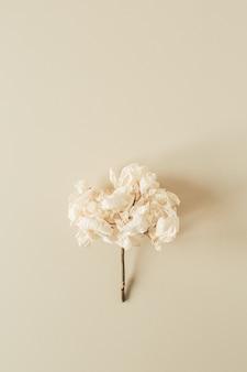 Weißer hortensienblumenzweig auf pastellbeiger oberfläche
